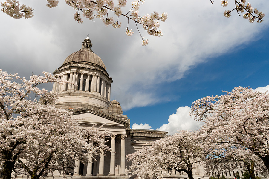 Olympia, WA - Washington State Capital Building in Olympia in the Springtime with Cherry Blossoms in the Foreground Looking Up